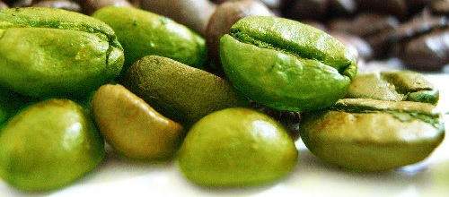 Green coffee bean contains higher amount of chlorogenic acid